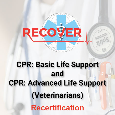 CPR Recertification: BLS & ALS Package (Veterinarian)